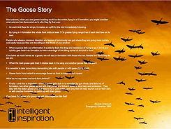 goose_story-001.jpg