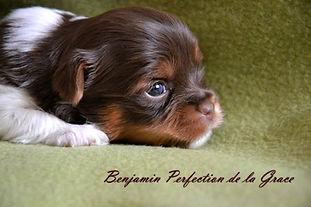 BLACKBURN BIEWERS Benjamin Perfection de