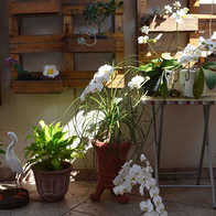 [olhando a parede com as plantas] - é hospital aqui, né? Quando elas não podem mais andar, aí colocam lá, nas caixas.  [olhando a escultura de pássaros] - não pode soltar eles pra andarem por aí?  [Olhando a orquídea]: - Olha, tá caindo... Vai cair e parar no Japão. [Maria]