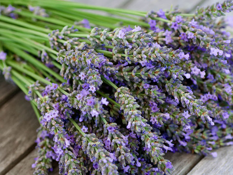 Why Lavender?