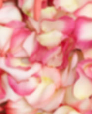 best-bi-color-rose-petals-globalrose.jpg