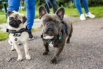 dog walk in park insurance