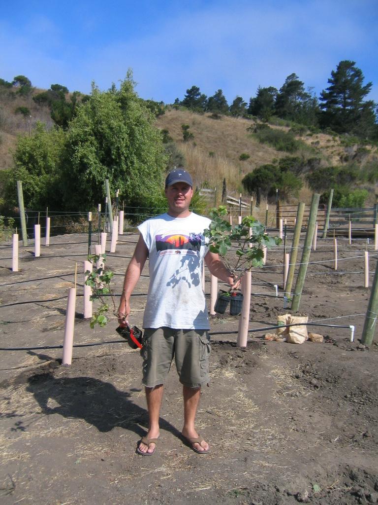 Planting Grapes 2006 051