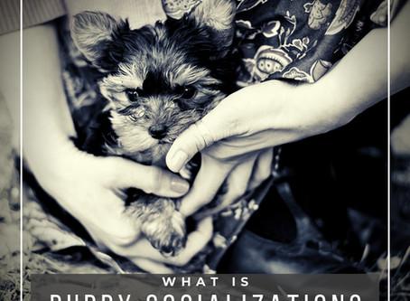 How Do I Socialize My Puppy?