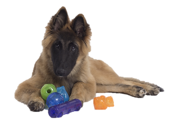 dogwithtoys2.png