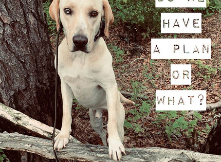 How To Maintain Your Dog's Training