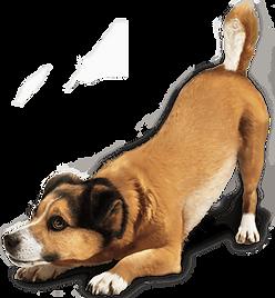 bowingdog.png