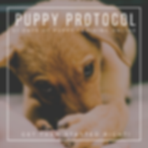 PUPPY PROTOCOL 2.png
