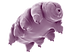 tardigrade560_edited.png
