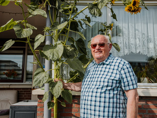 Cor Gloudie wint Rotterdam Bloeit Op met hoogste zonnebloem