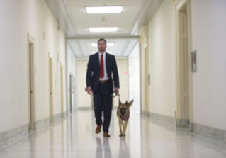"""VA study on whether dogs can heal vets with PTSD has critics"" news article"