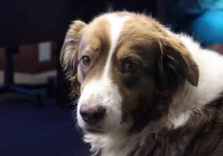 """PETS: Four-legged Friends Aid Healing With Animal-Assisted Therapy"" news article"