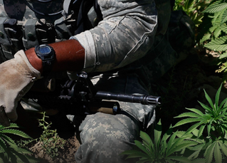 """Marijuana Usage For Combat Veterans Is A Cause Worth Fighting For"" article"