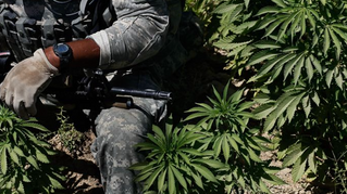 PTSD and Pot: The Fight to Get Veterans Some Weed