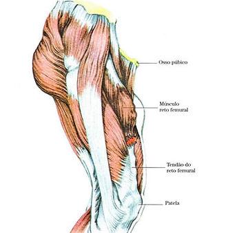 Lesões Musculares - Site Dr. César Martins