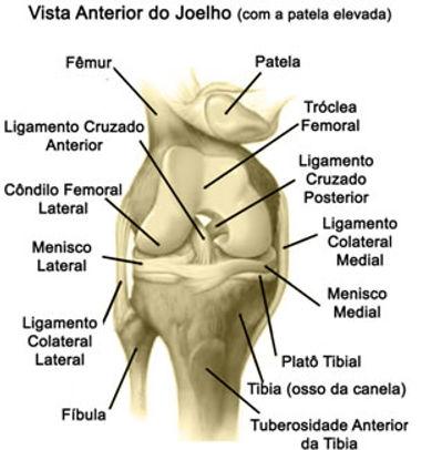 Anatomia do Joelho - Dr. César Martins