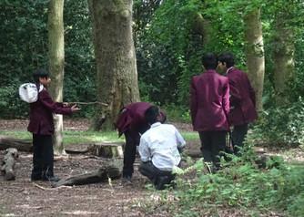 School Insect Survey Streatham Common La