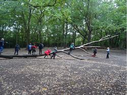 children climbing fallen tree