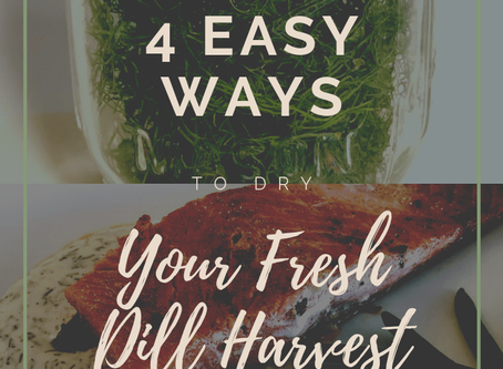 How to Dry Dill