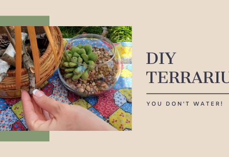 DIY Terrarium (You don't have to water)