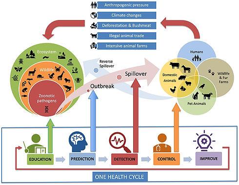 the one health cycle Zucca P 2021.jpg