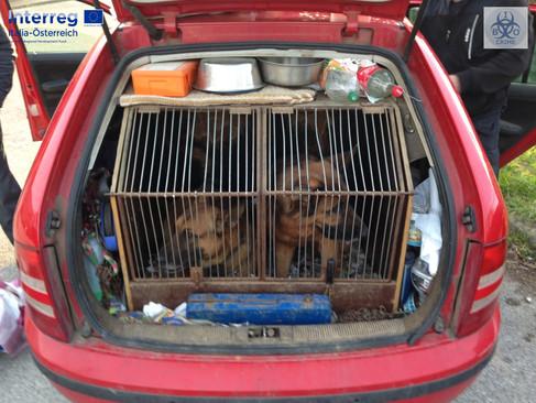 Illegal pet trade