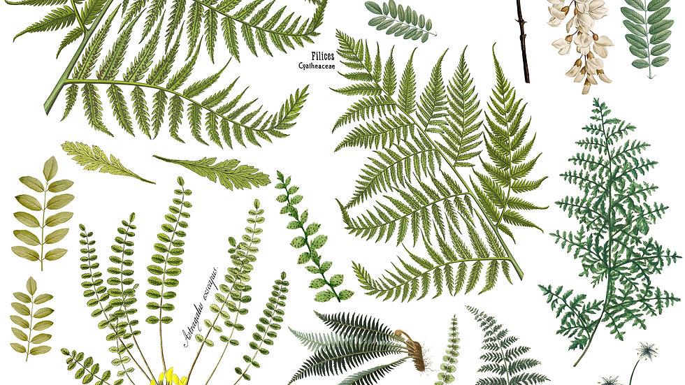 Frond Botanicals