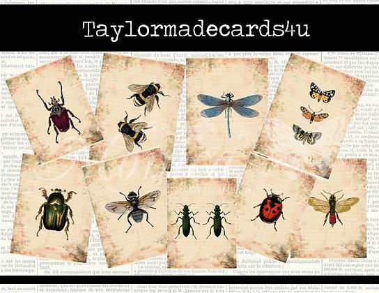 Bug ATC Cards