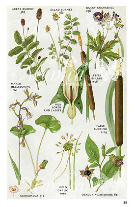 Wild Flowers Book page