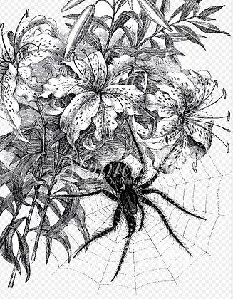 Spider on a Web- Digital Image