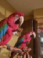 chanel macaws.jpg