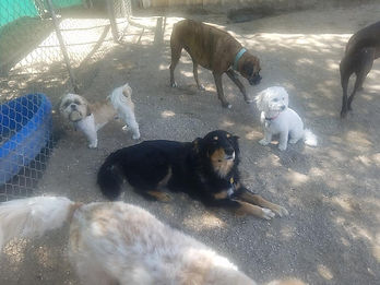 dog group.jpg