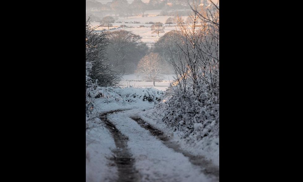 Judy woods in winter