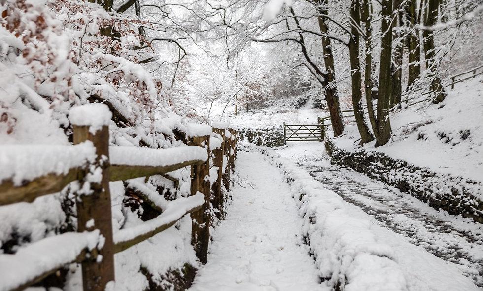 Snowy Judy woods in Bradford