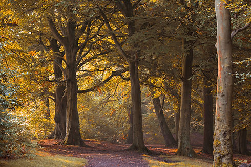 10. OCTOBER Bradford judy woods autumn (