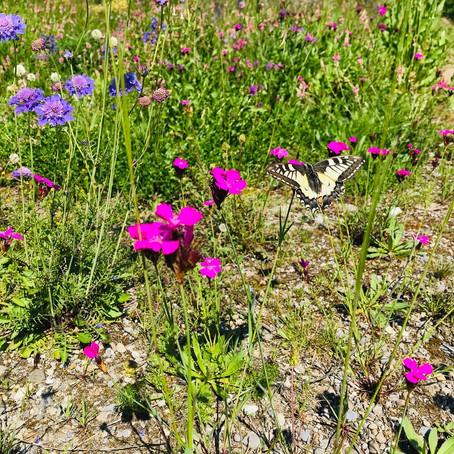 Plädoyer für Tier und Natur inkl. 15 Tipps zur Rettung der Insekten – von Ivana D'Addario