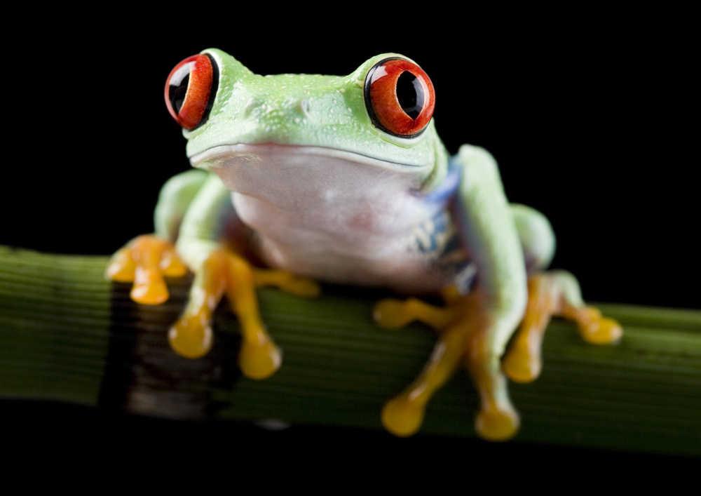 'Jeramiah the Frog'