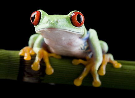 How Do You Increase Your Remote Work Productivity? And Reduce Anxiety? Eat Your Frogs First