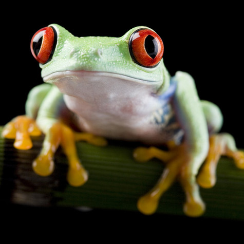 Eat That Frog - and other tips for procrastination