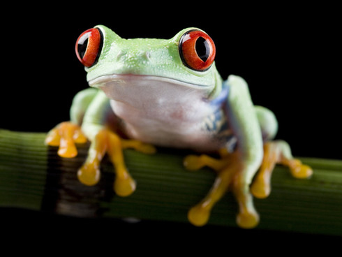 I just really like this frog.