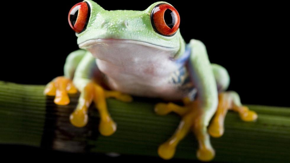 La fable de la grenouille ... ébouillantée !!!
