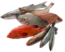frozen-fresh-fish-seafood-export