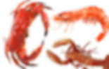 crab-shrimp-lobster-export-aquaone-seafoods