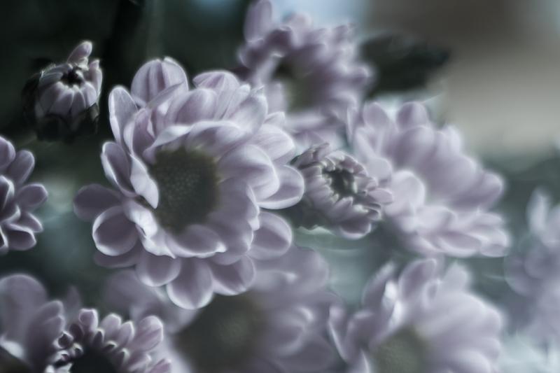 fleurs du mal-3