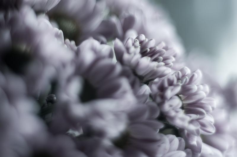 fleurs du mal-2