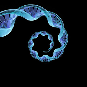 Opening the DNA