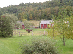 Roscoe rd.  The horses love it! copy.jpg