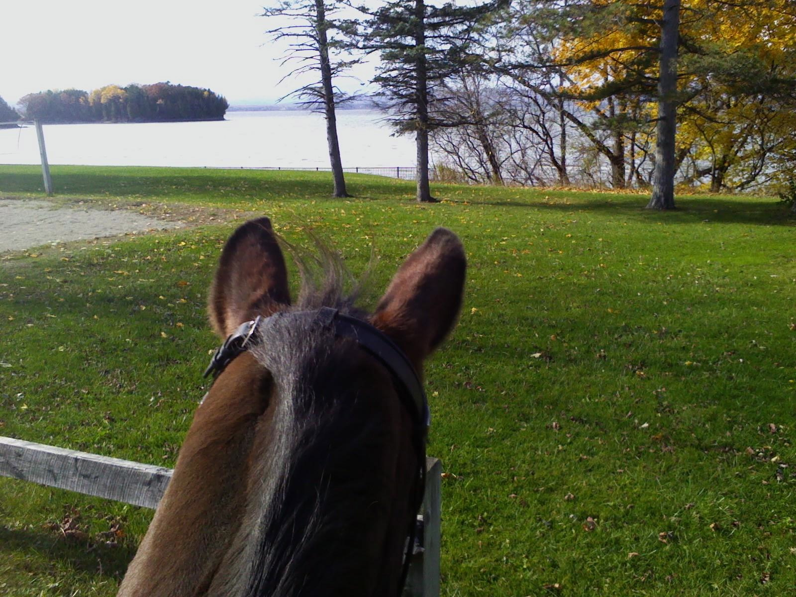 Willi, lake Champlain copy (2).jpg
