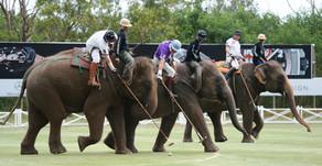 Elephant Polo en Sri Lanka