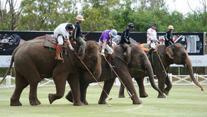 Elephant Polo en Sri Lanka